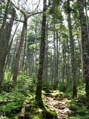 八ヶ岳の森