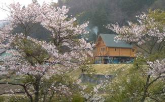 桜とログハウス