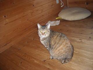 ログハウスに住んでいる猫