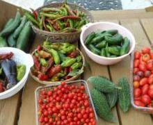 家庭菜園で楽しむ